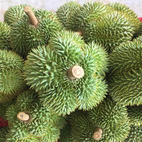 泰国甲仑榴莲